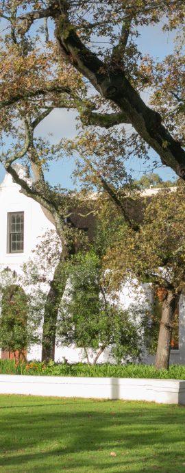 Spier Cape Dutch Homestead Surrounded by Oak Trees